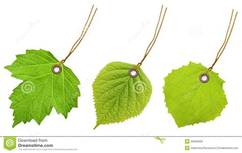Beschriftung Laubblatt by Tag Label Green Leaf Stock Image Image Of Discount