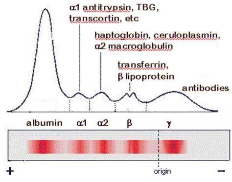 t protein in blood test protein electrophoresis serum causes symptoms