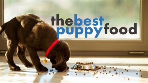 best food brands for puppies best puppy food brands how to feed a growing