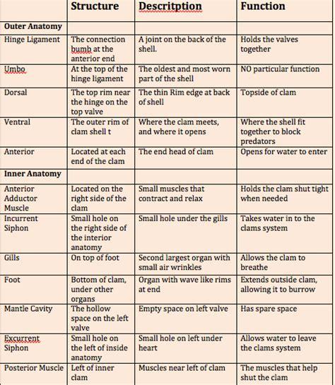 Types Of Tissues Worksheet by Tissues Worksheet Worksheets For School Getadating
