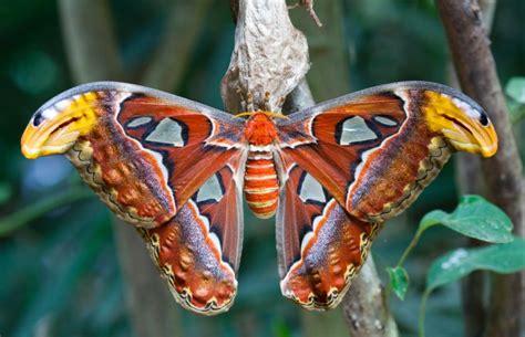 Die Sch Nsten Schmetterlinge 4950 by Die Sch 246 Nsten Schmetterlinge Der Welt