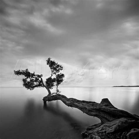 imagenes en blanco y negro paisajes fotos artisticas de paisajes en blanco y negro buscar