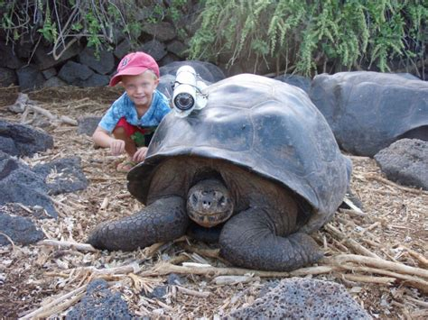 lada per tartarughe di terra zoo virtuale foto tartaruga terrestre