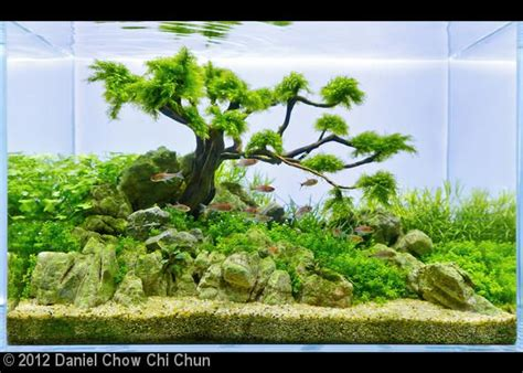 style aquascape which moss for bonsai penjing style aquascape