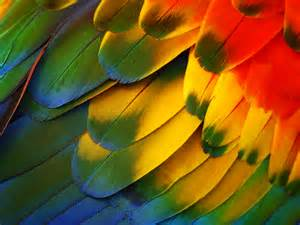 colorful feather 18 displaying 16images forcolorful feathers wallpaper 969