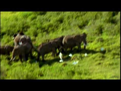 ryuichi sakamoto elephantism elephant dance youtube