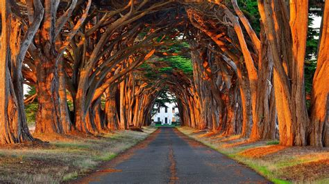 road   trees leading   house wallpaper