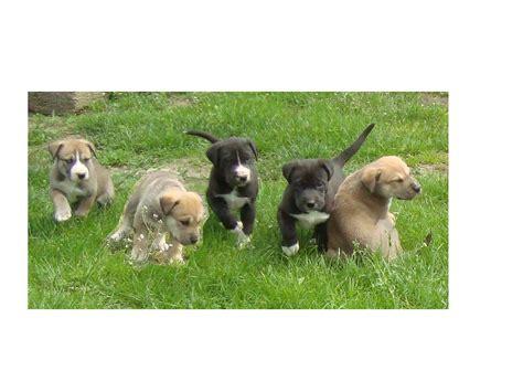 zu kaufen tieranzeigen mischlingswelpen kleinanzeigen
