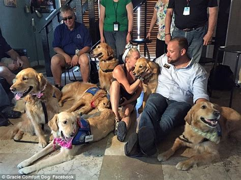 golden retriever orlando fl orlando shooting victims and families supported by comfort dogs and volunteers daily