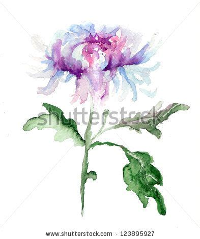 watercolor tattoos regina stylized chrysanthemum flower watercolor illustration by