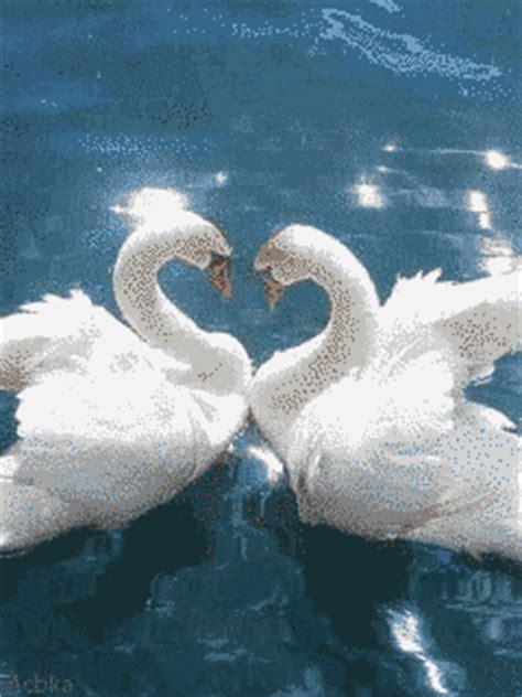 imagenes hermosas gratis para celular fotos de amor con movimiento hermosas para descargar en
