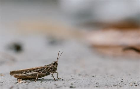 countries that eat who eats bugs the answer is actually everyone