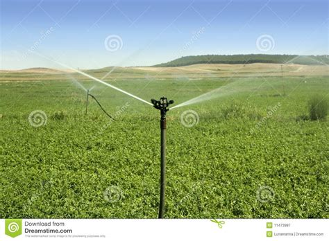 Green Garden Golf Course by Irrigation Vegetables Field With Sprinkler Royalty Free