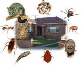 House Pest Control by Your House Belongs To You Not Pests Home Loan Advisor