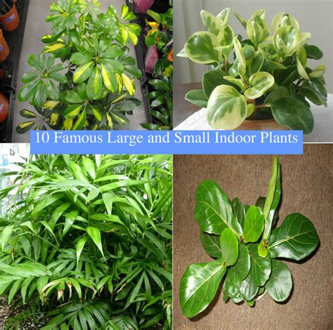 indoor small plants 10 famous large and small indoor plants the self sufficient living
