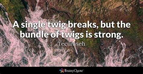 single twig breaks   bundle  twigs  strong
