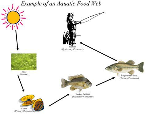 chesapeake bay food web diagram the chesapeake bay at the bay question 4