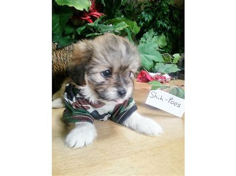 judy s puppy nursery many to choose from pets speedwell tn recycler