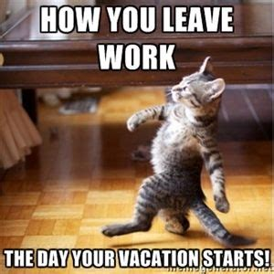Sho Jerob Untuk Kucing 25 best ideas about vacation meme on weekend