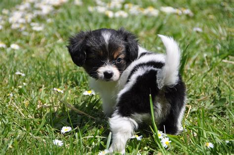 puppy photo phal 232 ne puppy photo and wallpaper beautiful phal 232 ne puppy pictures