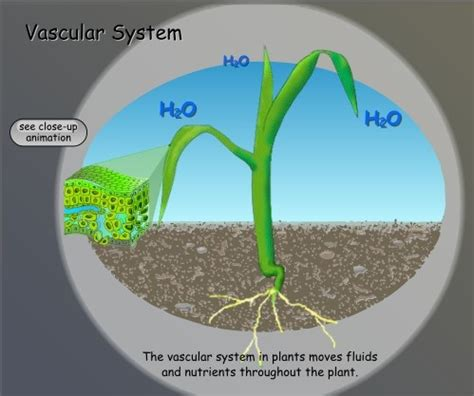 free technology for teachers hammocks plants and bedrooms 1000 images about vascular plants on pinterest vascular