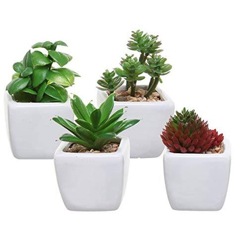 small plants amazoncom