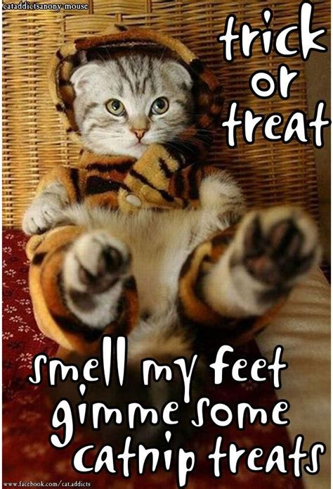 Halloween Cat Meme - 246 best halloween images on pinterest happy halloween