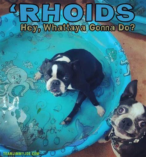 do dogs get hemorrhoids 15 pics memes chuckles team jimmy joe