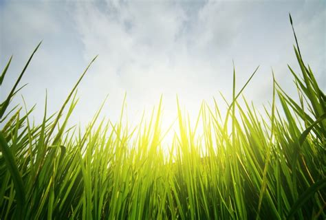 morning fresh green grass background pictures over