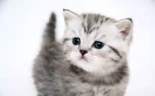 cute kitty   cats picture