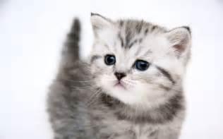 Cute cartoon cat stock photos and images 9099 cute auto design tech