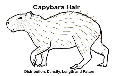 Capybara Coloring Page 2009 09 10 01 caplinhair