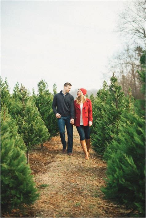 christmas tree farm illinois home design inspirations