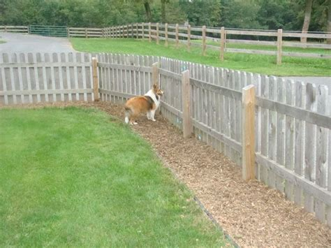 backyard fence for dogs pea gravel along fence doe dog trail solution in dog run