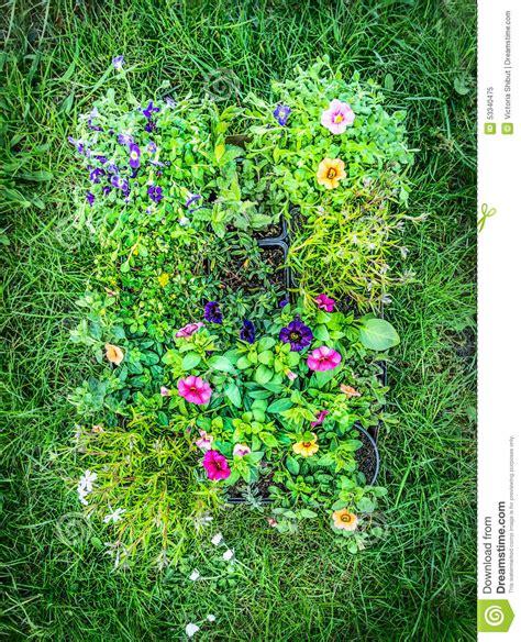 summer garden flowers in pot on green garden grass background top view stock photo image