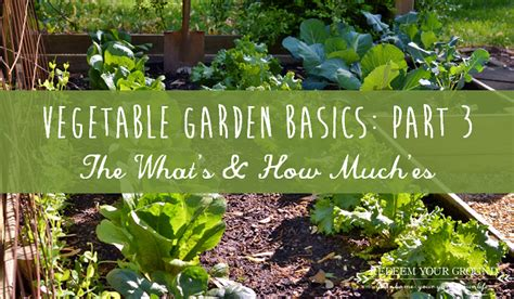 vegetable garden basics part 3 the what s how much es