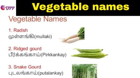 6 vegetables name in vegetables names with pictures in and tamil