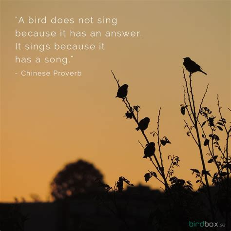67 best images about birdy quotes on pinterest high