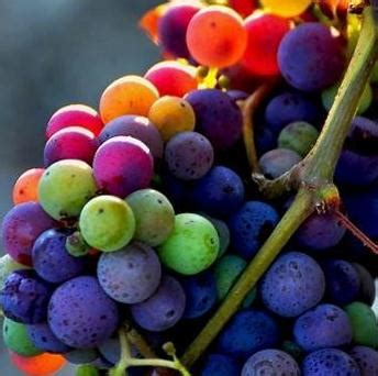 Do You To Use Organic Grapes For A Detox by Wine Grape Guide Flavor Character Food Pairing Tips For