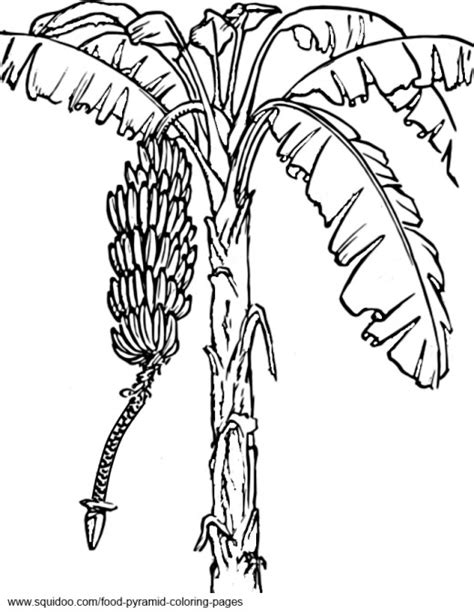 coloring page tree with fruit food pyramid coloring pages hubpages
