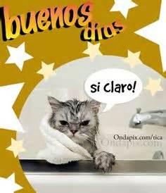 imagenes graciosas ondapix fotos divertidas de gatos imagenes de gatos con frases