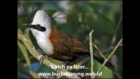 free download mp3 didi kempot cucak rowo suara burung cucak rowo youtube