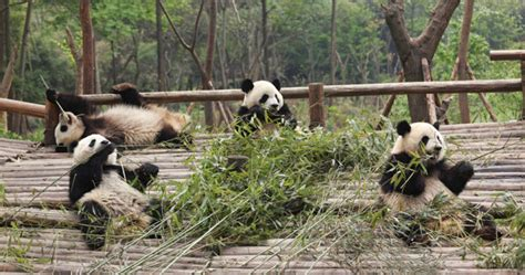How Algorithm Updates Shape The Everything You Need To About Panda 4 0 Lsi Media