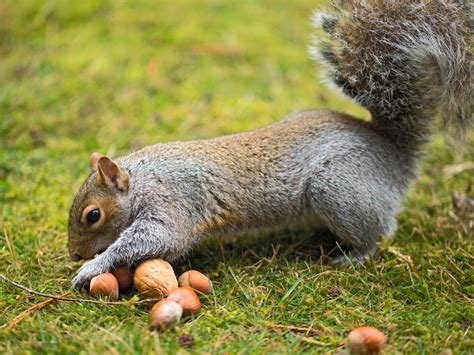 5 care basics of great importance in squirrels food habits