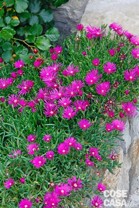 fiori da giardino fiori d estate per il giardino cose di casa