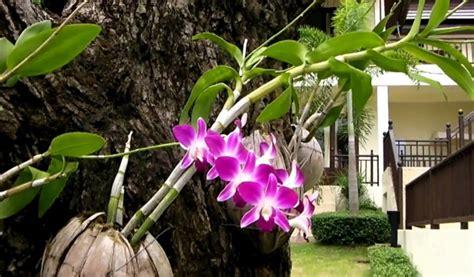 Jenis Pot Anggrek macam macam media tanam bunga anggrek tanaman hias