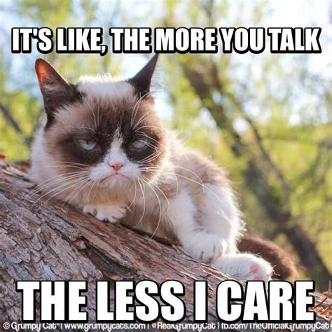 Fuck You Cat Meme - grumpy cat meme grumpycat grumpy cat pinterest
