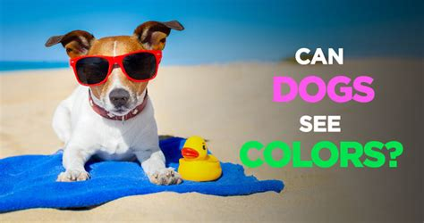 can see color can dogs see colors or are they completely color blind