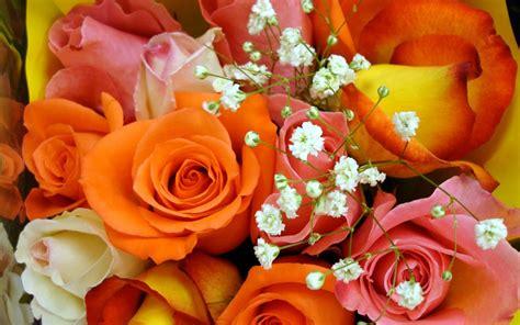 imagenes rosas de todos los colores ramo de rosas de colores im 225 genes y fotos