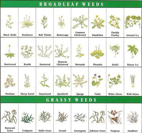 Galerry printable planting guide